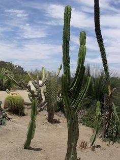 Balboa Park Cactus Gardens, San Diego, California