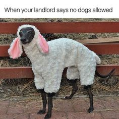 Funny Animal Pics Of The Day – Wackyy Picdump 7 can find Funny animal pics and more on our website.Funny Animal Pics Of The Day – Wackyy Picdump 7 Pho. Funny Dog Images, Funny Animal Pictures, Funny Dogs, Cute Dogs, Animal Pics, Funny Puppies, Dog Pictures, Funny Photos, Memes Humor