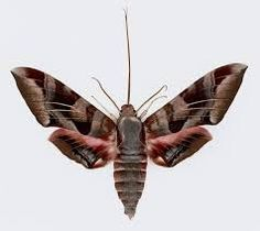 moths - Google Search