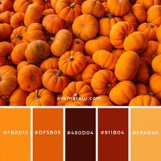 A bunch of pumpkins Color Palette Orange Palette, Orange Color Palettes, Color Schemes Colour Palettes, Colour Pallette, Color Combos, Rustic Color Palettes, Color Terracota, Rainbow Palette, Pumpkin Colors