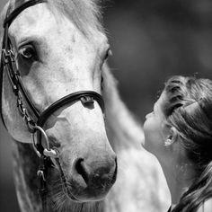 Love Hunter jumper eventing horse equine grand prix dressage equestrian fox hunt hunting