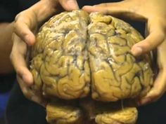 Brain - Part of the nervous system ▶ Bill Nye The Science Guy - Brain (Full Episode) - YouTube