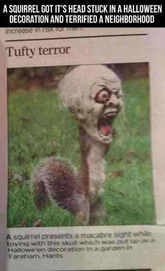 Squirrel gets head stuck in Halloween decoration and terrifies neighbors.