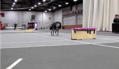 Oh no: MIT's Cheetah robot can jump over hurdles while running, youtube see; https://www.youtube.com/watch?v=_luhn7TLfWU
