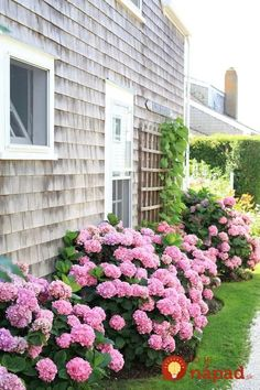 pretty front yard landscape design for your garden design Side Yard Landscaping, Hydrangea Landscaping, Hydrangea Garden, Landscaping Ideas, Hydrangeas, Hydrangea Flower, Acreage Landscaping, Hydrangea Paniculata, Privacy Landscaping