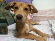 Annabella Sofia *;* Puppy Dog!