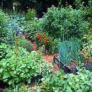 ¿Por qué es necesaria la correcta asociación de cultivos?
