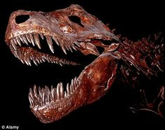 Dinowars: Fossil hunters and scientists turn Jurassic Coast into a battlefront