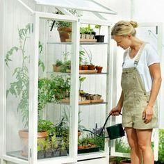 Hasselfors odlingsvitrin