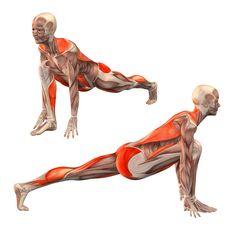 Low lunge, left leg straight - Utthita Ashva Sanchalanasana left - Yoga Poses | YOGA.com                                                                                                                                                                                 More
