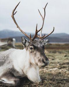 "hailey playfair on Instagram: ""How many sleeps left?! 🎄🎅🏻"" Travel Photography, Animals, Instagram, Animales, Animaux, Animal, Animais, Travel Photos"