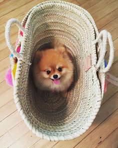 Ready for the beach on #NationalDogDay!