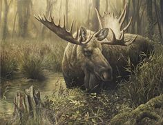 http://www.denismayerjr.com/images/moose-lg.jpg