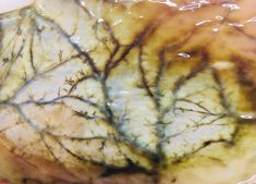Early decomposition: mucosal lining deterioration via @chaconlaw on Twitter