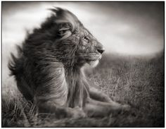 An army of sheep led by a lion is better than an army of lions led by a sheep.  Alexander the Great
