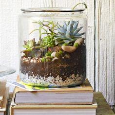 Cookie jar garden