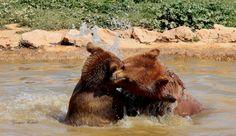 bear by GEORGE KOSTAKIS on 500px