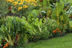 There's a growing subculture of gardeners who are breaking from the traditional vegetable garden and bravely going where few gardeners have gone before.