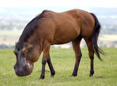 Brown with Black Mane Horse Has Science Gone Too Far? Or Not Far Enough? Visit for more Hybrid Animals!