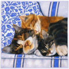 Sleepy Macskák by Anne Mortimer