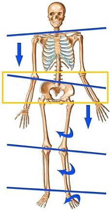 What is a Lateral pelvic tilt? It is the asymmetric positioning of the pelvis wh. Back Strengthening Exercises, Foot Exercises, Scoliosis Exercises, Hip Mobility Exercises, Hip Pain, Knee Pain, Back Pain, Cardio Yoga, K Tape