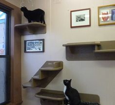 1000 Images About Cat Furniture On Pinterest Wall