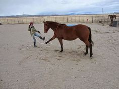 15 Things To Do With Your Horse in 15 Minutes or Less! MyHorsemanship.Blogspot.com