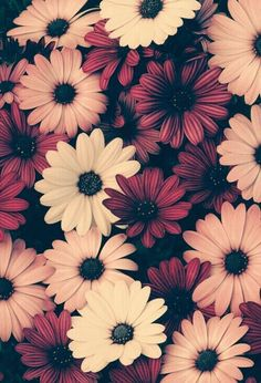 Image about pink in Wallpaper 💞 by Patty on We Heart It Flor Iphone Wallpaper, Wallpaper Pastel, Sunflower Iphone Wallpaper, Flower Background Wallpaper, Fall Wallpaper, Cute Wallpaper Backgrounds, Tumblr Wallpaper, Pretty Wallpapers, Aesthetic Iphone Wallpaper