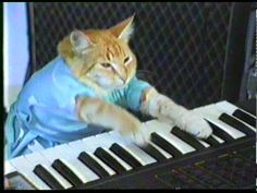 """""""Play Him Off, Keyboard Cat"""" by Charlie Schmidt"""