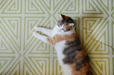 Jennifer's cat relaxes on a rug purchased from Wayfair.