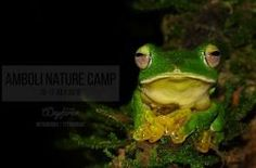 Amboli Nature Camp with Wayfarer Outdoors - http://www.eventsnode.com/pune/event/amboli-nature-camp-with-wayfarer-outdoors/