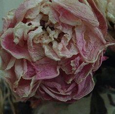 ❈ Fleurs Foncées ❈ dark art photography flowers & botanical prints - John Derian