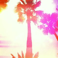 Palm trees #Florida #hipstamatic