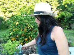 Healthy Bite: Gardening - Removing Buds From Home Garden Herbs