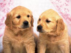 1600x1200 HD Widescreen Wallpaper - dog
