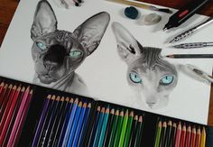 sphynx cats, drawing by lorine angelmann