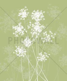 Dandelions - Green - Tapetit / tapetti - Photowall