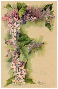 Victorian Graphic  Lilac Monogram  Letter F