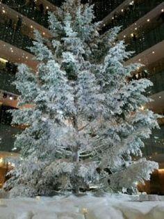 今年オープンしたKITTE名古屋のクリスマスツリーは本物のもみの木を使っています さらに真っ白な雪が降り積もっているみたいでうっとり(ω) 夕方から夜にかけてはライトアップもしています ぜひクリスマス気分をご堪能ください tags[愛知県]