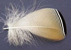 Feather Emporium - Product Directory