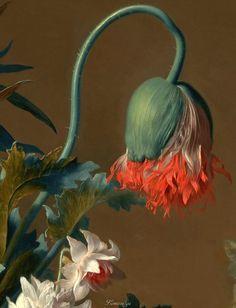 Nature Illustration, Botanical Illustration, Botanical Flowers, Botanical Prints, Flower Installation, Dutch Painters, Old Paintings, Painting Inspiration, Daily Inspiration