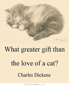 Que maior presente do que o amor de um gato?