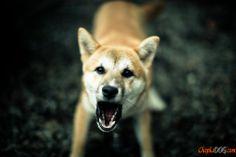 фото злых собак
