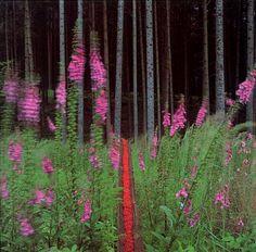 Nils Udo - bark of spruce, red elderberry 1993 Dietenbronn, Bavaria