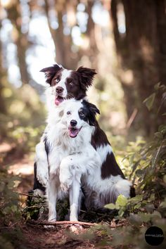 Gin and Vodka - Border collie by Mariiana Capela on 500px