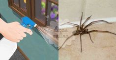 Fantástico! Afaste insetos e aranhas com estes 7 métodos naturais poderosos! - # #InseticidaCaseiro #repelentenatural #replentedeinsetos