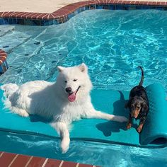 Animals And Pets, Funny Animals, Cute Animals, Adorable Dogs, Cute Babies, Dog Pool Floats, Funny Animal Pictures, Happy Monday, Picture Video