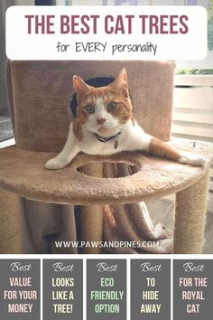 The best cat trees for every personality! Just in time for 'spoil your cat' day, find the best cat tree for your feline friend. Whether you're looking for the best cat tree for large cats, or the best for a royal cat, this list has you covered! Cool Cats, Cool Cat Trees, Happy Animals, Cute Animals, Natural Cat Litter, Diy Cat Toys, Cat Perch, Pet Dogs, Pets