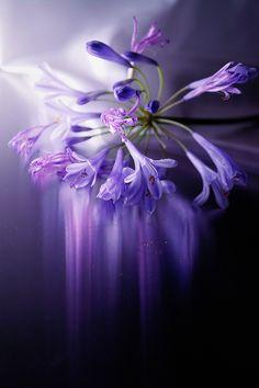 ** Fragility of beauty