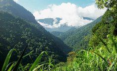 Viaje a la selva en la sierra neveda de Santa Marta https://blogtrip.org/ciudad-perdida-tayrona-trek-sierra-nevada-santa-marta/
